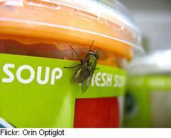 Flysoup